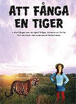 Affisch Att fånga en tiger